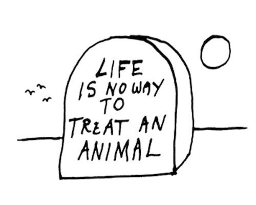Life is No Way to Treat an Animal II Image